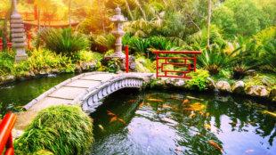 Tartsunk aranyhalakat a kerti tóban