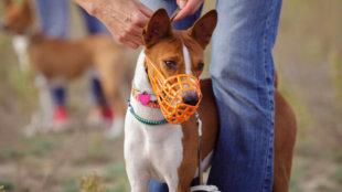 Hogyan szoktassuk szájkosárhoz kutyusunkat?