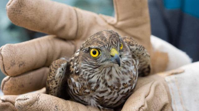 Szárnyas-mentés – Mit tegyünk, ha sérült madarat találunk?