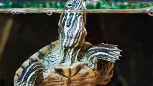 Teknős egyszeregy