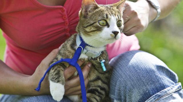 A hónap legjobb cica kiegészítői!