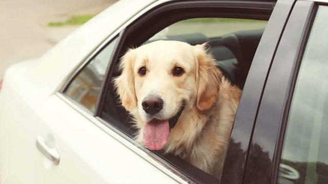 Kutya, utazás, biztonság