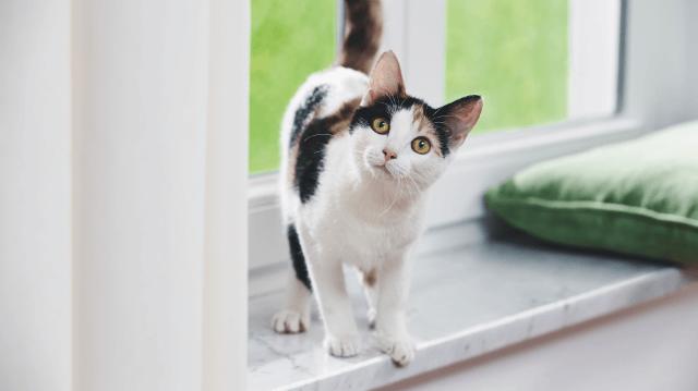 A macskák érzékelése