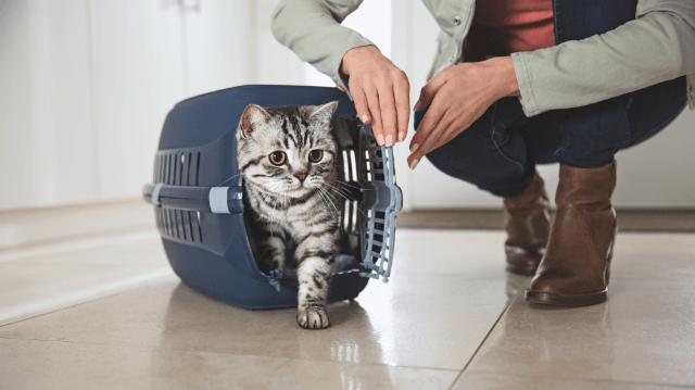 A macska szocializációja