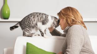 A gazda hatása a macska viselkedésére