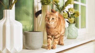 Nevelés (A macska viselkedésének befolyásolása, lehetséges eszközök)