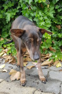gazdikereső kutyus, Zoli