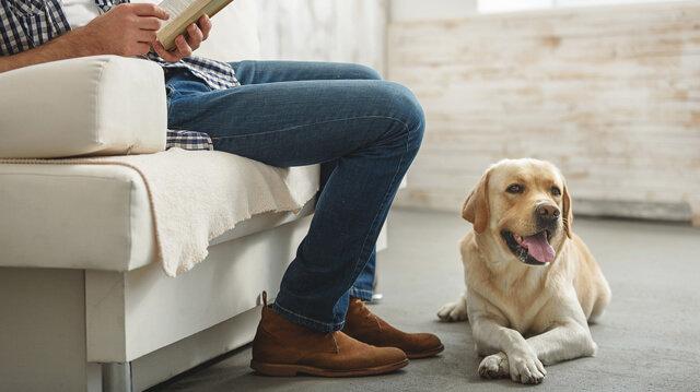 Hogyan válhatunk egy stabil idegrendszerű kutya boldog tulajdonosává?