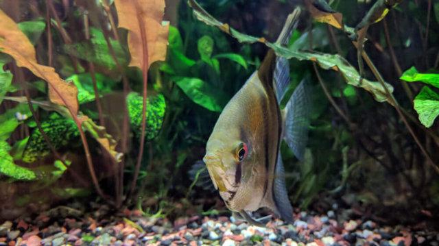 Az akvárium növényzete – mű vagy valódi?