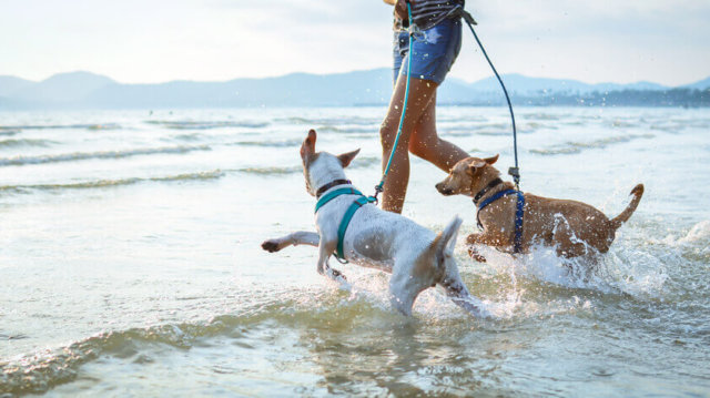Kirándulás nyáron – Kutyabarát strandok