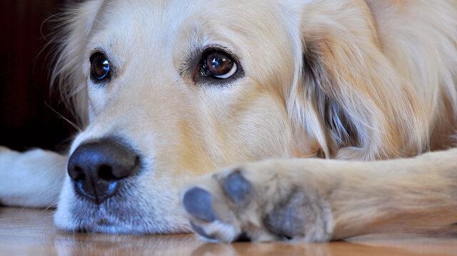 Hogyan segítsük kutyánkat kutyatámadás után?