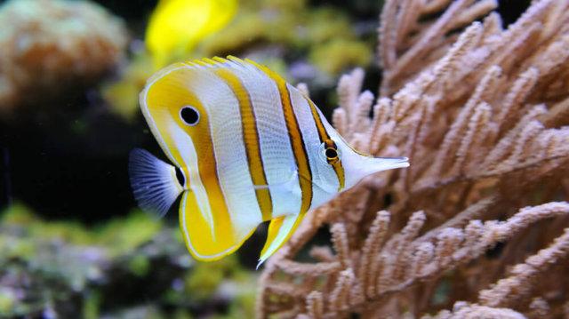 Haladóknak: Sósvízi akvárium!