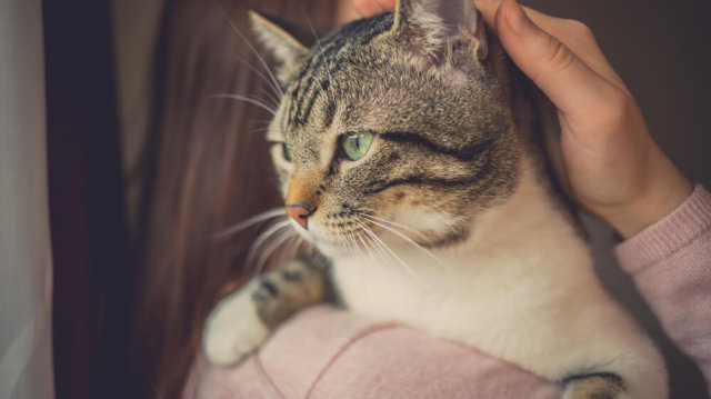 Boldog cica-gazdi kapcsolat