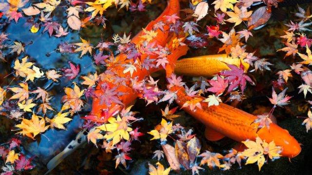 Kerti tavunk őszi karbantartása