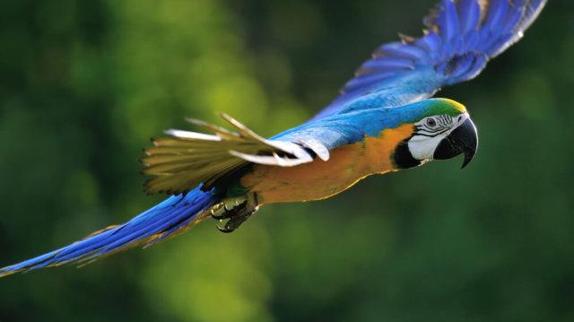 A biztonságos papagájröptetés alapszabályai