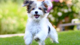 Mit tehetünk kutyusunk mozgásszerveinek egészsége érdekében?