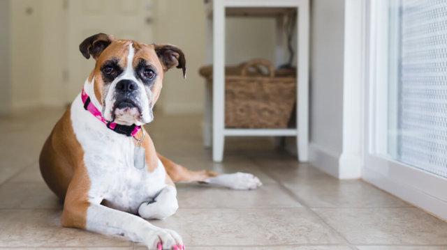 Kutyapanzió: jó vagy rossz megoldás?