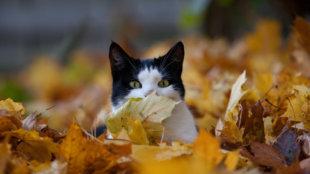 Egészségvédő tippek kerti cicáknak