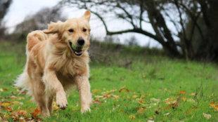 Aktív vagy lustálkodós? – Különböző kutyafajták mozgásigénye