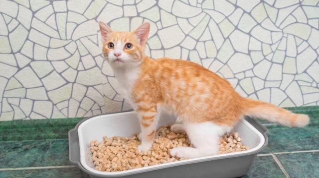 Ökológiailag tiszta macskaalom