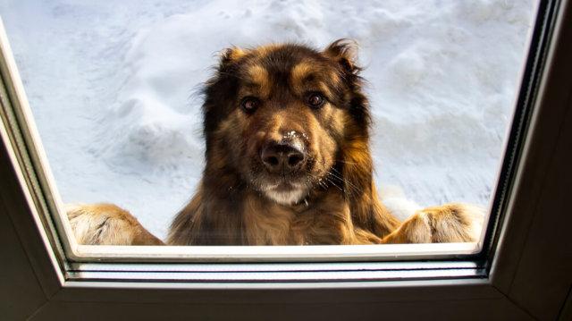 Kinti-benti kutyatartás előnyei és hátrányai