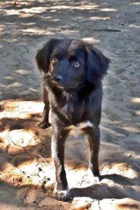 gazdikereső kutya: Zokni