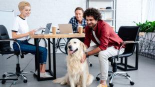 Milyen kutyát vihetünk bátran az irodába?