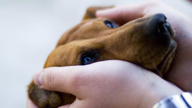 Hogyan szerettessük meg kutyusunkkal a szeretgetést?