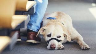 Stresszmentes tömegközlekedés kutyával