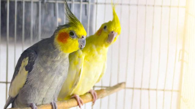 Papagájok teleltetése
