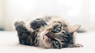 Egészségvédő tippek cicák számára