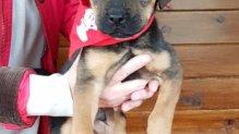 gazdikereső kutyusunk: Dió