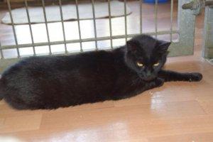 Macsi egy tökéletes fekete szépség