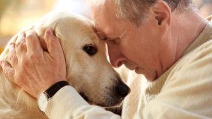 Idős emberek leghűségesebb társai
