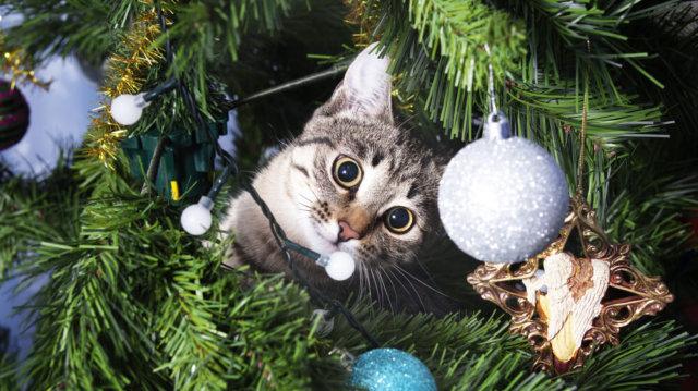 Hogyan védjük meg karácsonyfánkat minitigrisünktől?