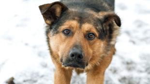 Legyünk karácsonyi jótevők, és segítsünk az árva és kóbor állatoknak!
