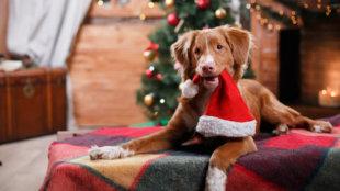 Kiskarácsony, Nagykarácsony, boldog kis bundás barátok!