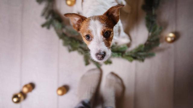 Békés Ünnepeket! – Karácsonykor se feledkezzünk meg kedvenceinkről