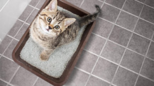 Tiszta alom, boldog macska