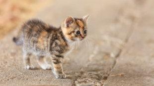 Amikor kiscicánk elkóborol