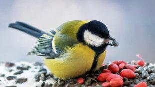 A legfinomabb téli madárcsemegék