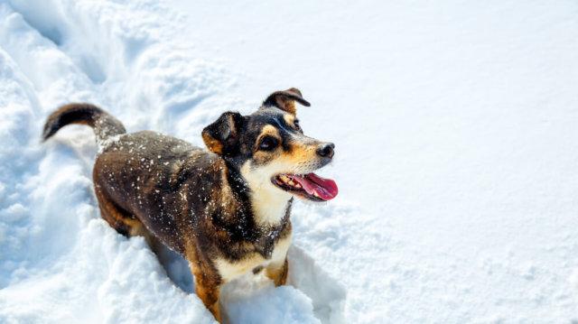 Téli programok kutyusunkkal
