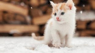 4 tipp a kiscicák téli védelmére