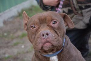 Csoko kutyánknak mielőbb új gazdit szeretnénk!!!