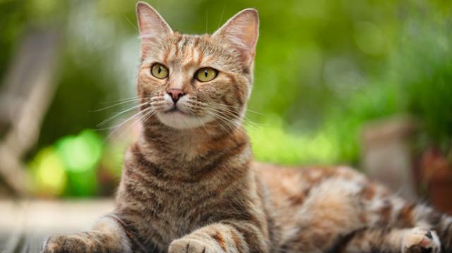 7 érdekes viselkedés cicánktól