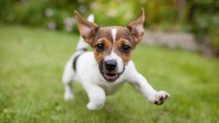 Mit tegyünk, ha kutyusunk izgalmában bepisil?