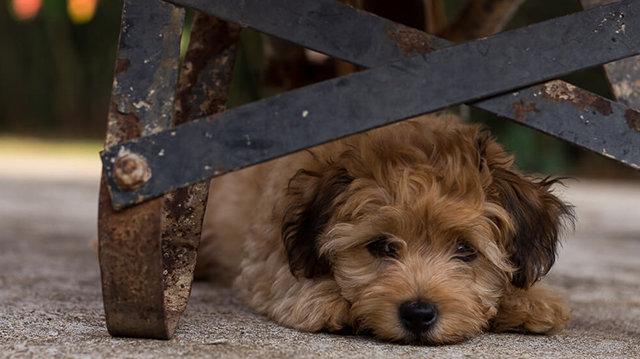 Mik a leghatékonyabb módszerek félős kutyusunk számára a petárdázás ellen?