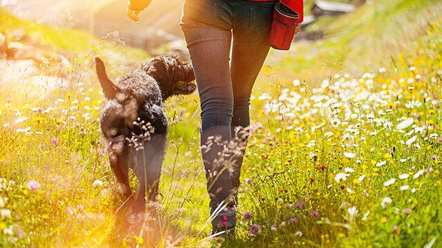 Pórázon szépen sétál láb mellett a kutyánk, póráz nélkül viszont elkalandozik?
