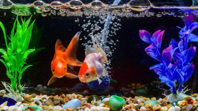 Látványos akváriumberendezések