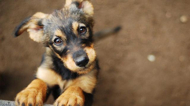 5 érv a kutyatartás mellett